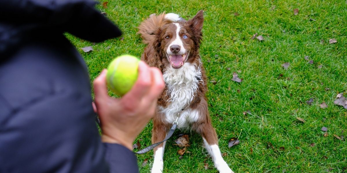 Dog Training Rewards: A Guide Beyond Treats   Paws and Reward