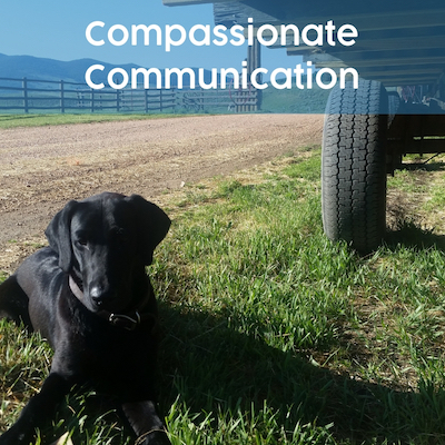 paws and reward communication